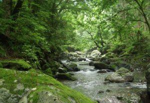 シプレ系の香り  苔や木のような香り。  森林浴のようなリラックスできるイメージ。
